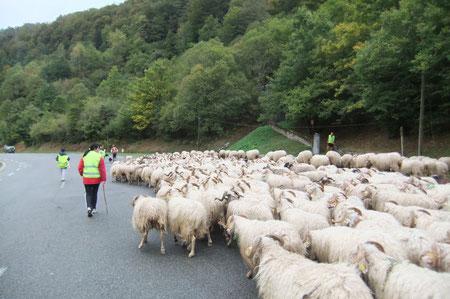 Au débouché du vieux chemin de Peyrenère emprunté par les Pèlerins de Compostelle