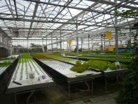 水耕栽培の見学に行ってきました♪