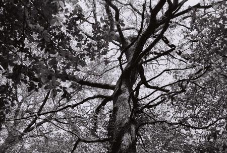 Dans un bois en Bourgogne.Canon canonet 28 de 1971.