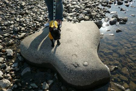 こちらはチドリ石。京都っぽいね。