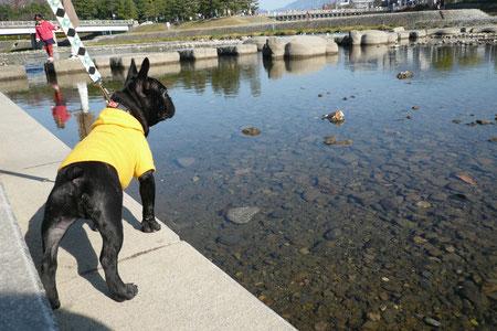 川に亀型の飛び石があるよ