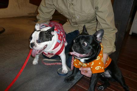行き着けのヘアサロンの看板犬「ちまきちゃん」♀3歳と初対面のプリオ君。ちょっと緊張ぎみ?