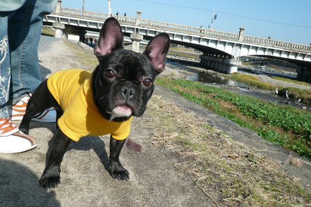 今日は京都の鴨川へお散歩へ出かけたよ☆