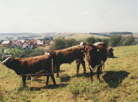 Rinderzucht im LUM