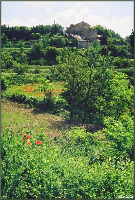 Campagne environnante à Goult, Lubéron - Vaucluse (84)