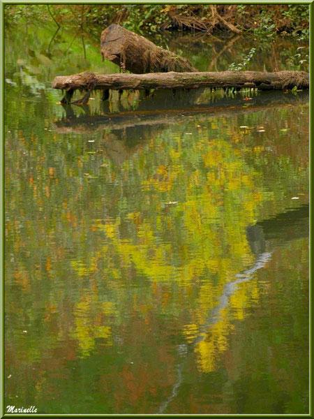 Bois et reflets automnaux sur La Leyre, Sentier du Littoral au lieu-dit Lamothe, Le Teich, Bassin d'Arcachon (33)