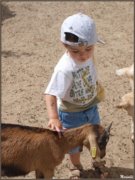 Caresser les biquettes, Parc de la Coccinelle, mini-ferme à Gujan-Mestras, Bassin d'Arcachon