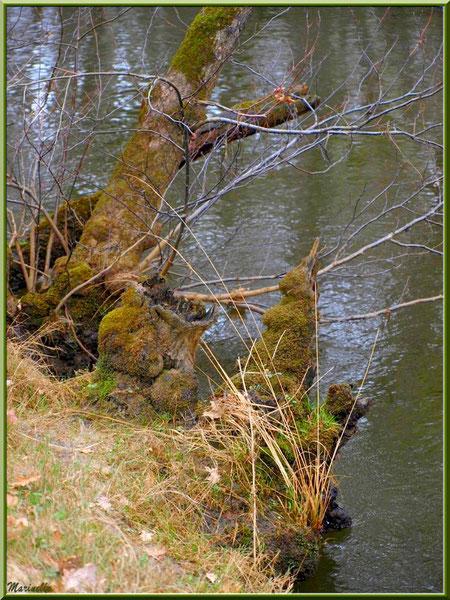 Végétation hivernale et reflets en bordure de La Leyre, Sentier du Littoral au lieu-dit Lamothe, Le Teich, Bassin d'Arcachon (33)