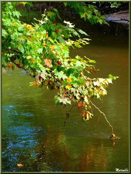 Branche d'automne et reflets sur La Leyre, Sentier du Littoral au lieu-dit Lamothe, Le Teich, Bassin d'Arcachon (33)