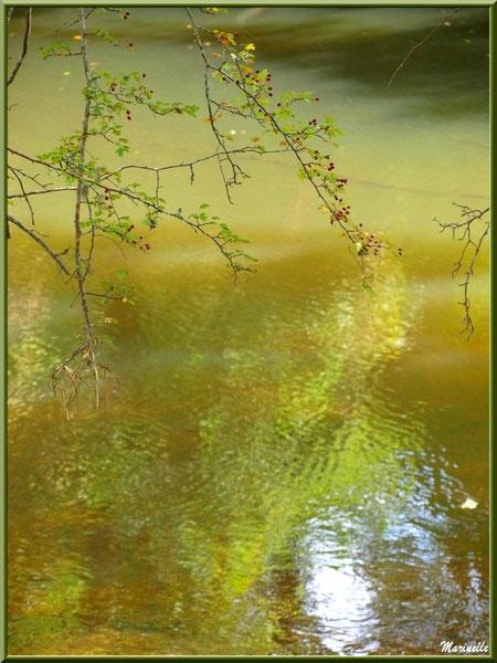 branche d'aubépine et ses baies, verdure et reflets en en bordure de La Leyre, Sentier du Littoral au lieu-dit Lamothe, Le Teich, Bassin d'Arcachon