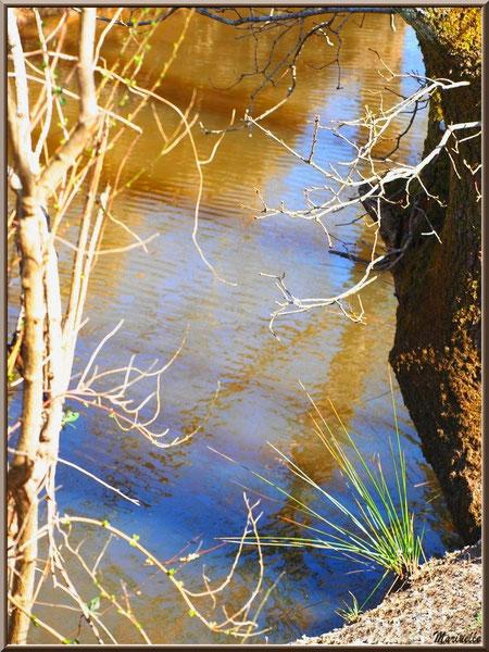 Végétation et reflets en bordure de La Leyre, Sentier du Littoral au lieu-dit Lamothe, Le Teich, Bassin d'Arcachon (33)