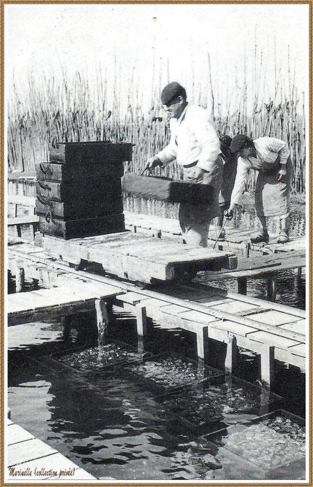 Gujan-Mestras autrefois : Ostréiculeurs sur une passerelle de réservoir, Bassin d'Arcachon (photo collection privée)