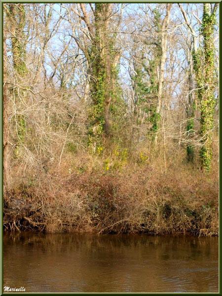En bordure de La Leyre en hiver, Sentier du Littoral au lieu-dit Lamothe, Le Teich, Bassin d'Arcachon (33)