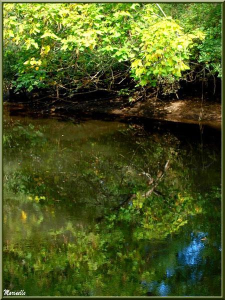 Arbres et reflets en bordure de La Leyre, Sentier du Littoral au lieu-dit Lamothe, Le Teich, Bassin d'Arcachon (33)