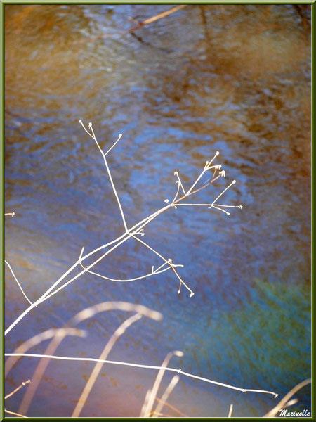 Herbacées et reflets en bordure de La Leyre, Sentier du Littoral au lieu-dit Lamothe, Le Teich, Bassin d'Arcachon (33)