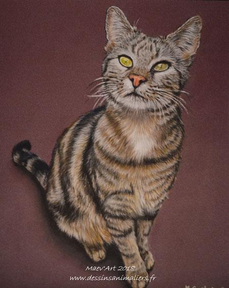 Portrait de chat gris aux pastels secs