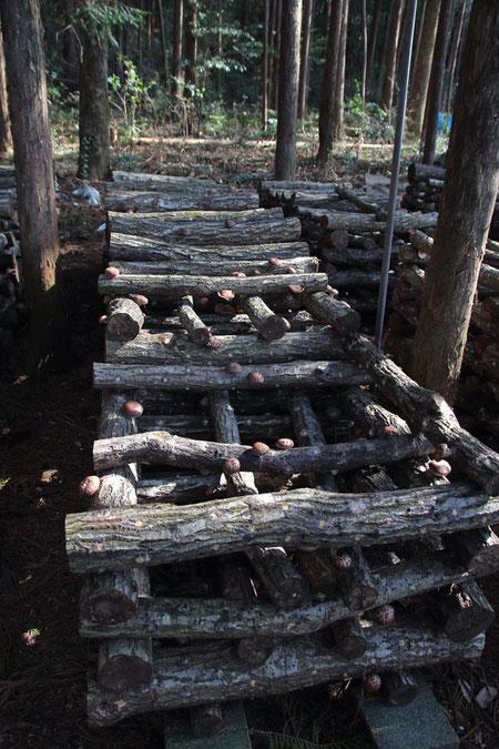 何千本...いや万の単位?の原木が使われている