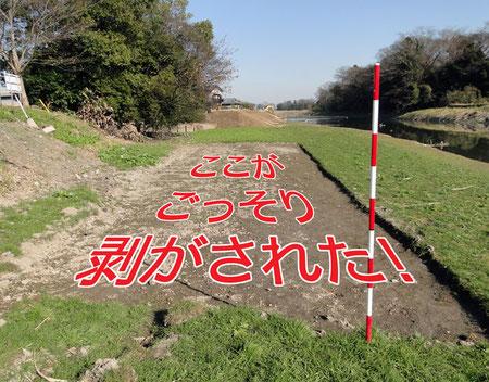 自生地が消失した! 奥に築堤工事が見える。ここまで伸びて来るのだろう。