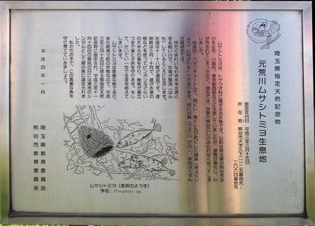 ムサシトミヨの解説