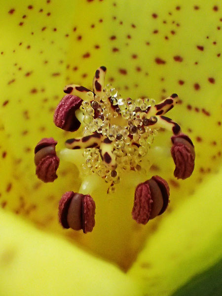 花の中心部