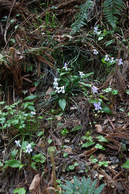 斜面にたくさんの花たちが咲いていた