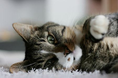 Katze Entspannung