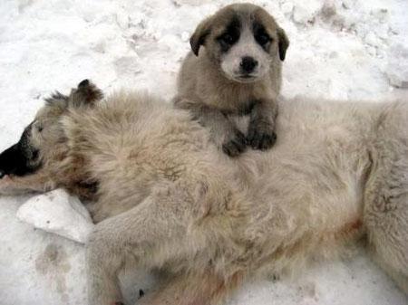 stray dogs, streuner, strassentiere