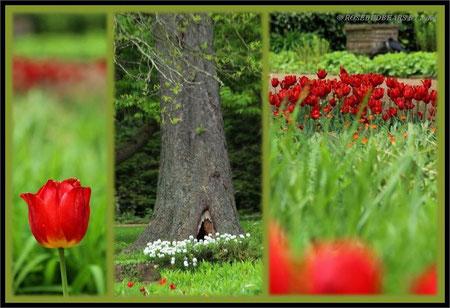 Hannover Stadtpark Tulpen