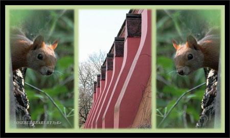 Eichhörnchen Sternwarte Hannover Linden