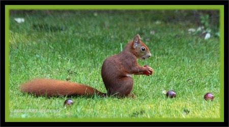auch Eichhörnchen mögen Weintrauben
