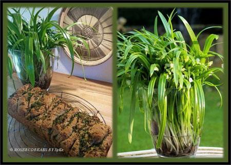Allium paradoxum  Wunderlauch