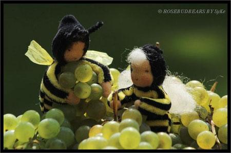 Erntehelfer auch bei den Weintrauben