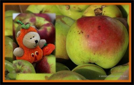 Starbucks Mini-Kürbisbärchen sichtet die Apfelernte ...