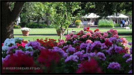 der Stadtpark Hannover mit Rosencafé-Sonnenschirmen und schönen Geranien