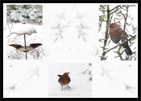 Amsel, Drossel, Fink und Star - im Schnee