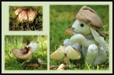 Pilze Rasen Hase