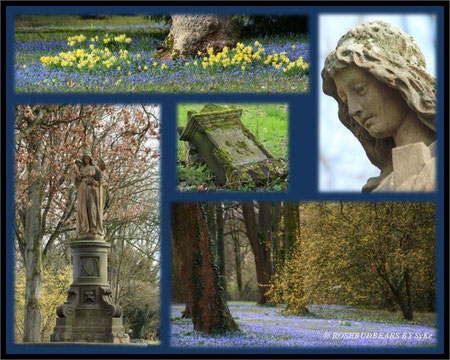 Hannover Linden Bergfriedhof Scilla