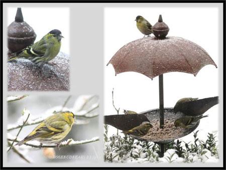 im Schnee unterm Regenschirm - Zeisige