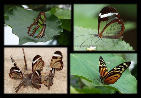 Berggarten Hannover Schmetterlinge