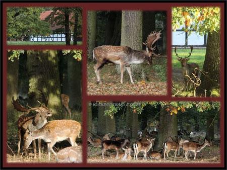 Tiergarten Hannover Damwild