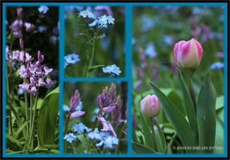 Hasenglöckchen Tulpen Vergissmeinnicht