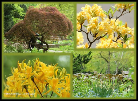 "Hannover Stadtpark Rhododendron ""die Kniende"""