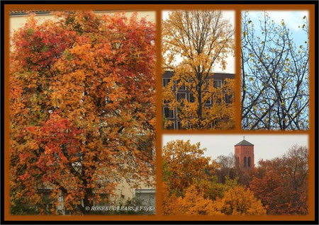 Herbst Hannover St. Marien