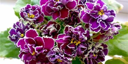 Flower exhibition Kyiv