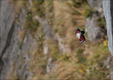 Vallée d' Aspe : Vautour fauve et Tichodrome échelette © JLS