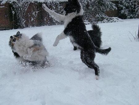 giochi pazzi nella neve