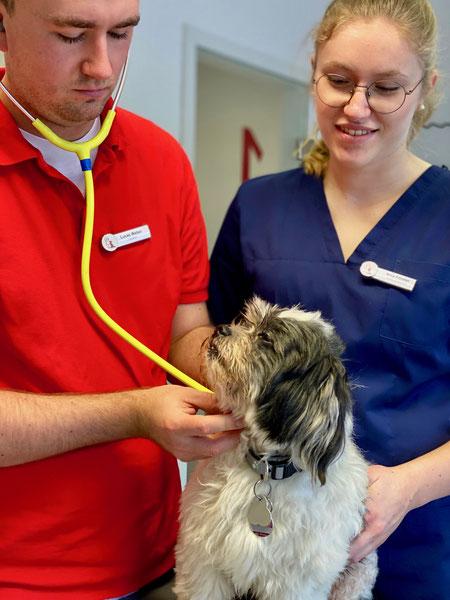 Azubi gesucht, Tiermedizinische Fachangestellte, Tierarztpraxis, Tierarzt