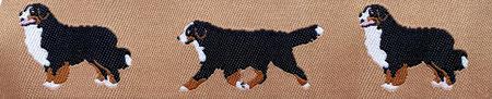 Berner Sennenhund beige
