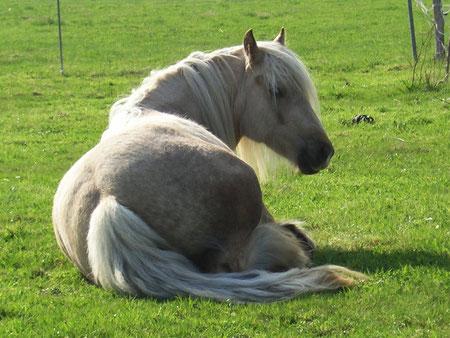 Noch liegt sie entspannt auf der Wiese...  Foto: Antje Girr