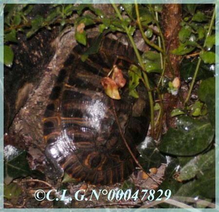Bayou, bien cachée au fond du jardin parmi les plantes!